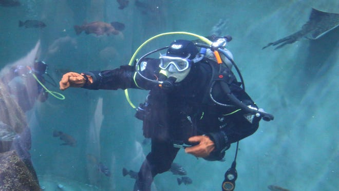 Some of the best views on the Oregon Coast are for volunteer divers at the Oregon Coast Aquarium according to Mike Akers of Salem, a crew leader for a dive team.