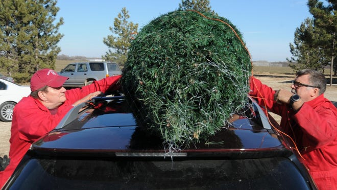 Bel Tree Farm workers Bill Houltberg, left, and Rex Lacy, of Assaria, tie down a Christmas tree at the BEL Tree Farm, 401 S. Holmes Road, outside Salina. The Bel Tree Farm has been a family-operated Christmas tree farm since 1965.