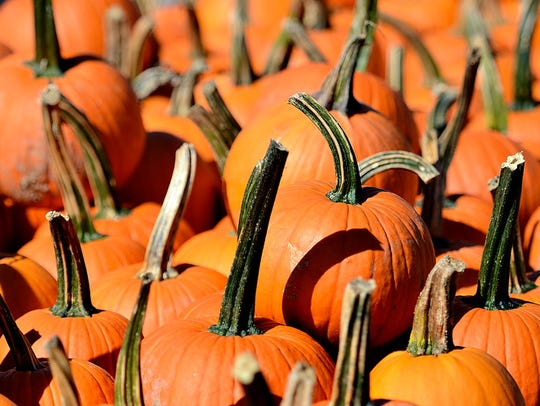 Pumpkins are shown at Whitecombs Farm Market in York,