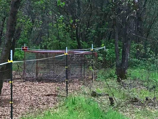 Mountain lion trap
