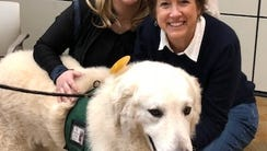 Therapy dogs come to work at Fidelity Investments in