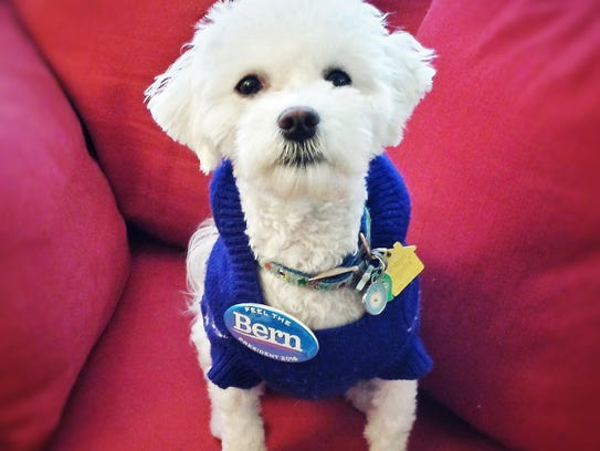 Candide is a one-year-old Havanese/Bichon Frise mix