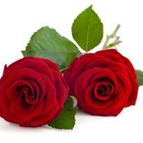 10 ways to celebrate Valentine's Day in Sumner