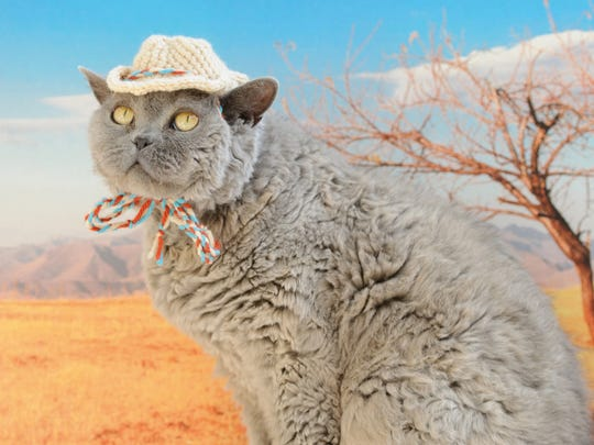 """This Cowboy Hat is featured in the book """"Cats in Hats,"""" published by Running Press."""