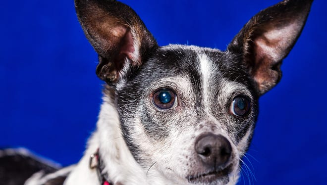 A photo of Jonesy, a dog that was up for adoption at Nevada Humane Society taken April 2014. Discounted spay and neuter services for dogs are being offered to Sparks residents to help reduce the number of unaltered dogs in Sparks.