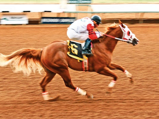 Kiss My Hocks winning his 2014 Rainbow Futurity trial.