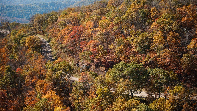 6 x 6 Pion Design Summer Falls Into Autumn Apple Orchard
