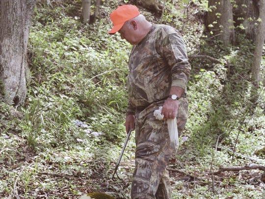 A morel hunter looks for the popular fungi on privately-owned