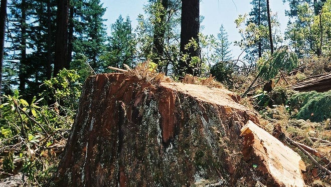 Group claims to have sabotaged Oregon lumber mill's logs
