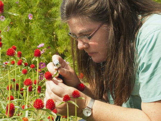 Lena Struwe, director of the Chrysler Herbarium at
