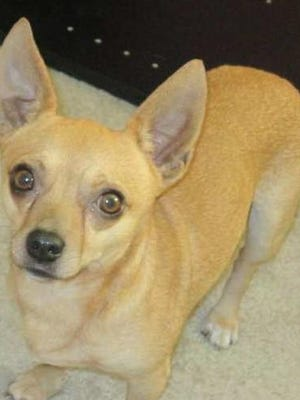 Bruiser was last seen near Woodville Highway and Owen Road (near the Leon/Wakulla border) on Sept. 9.