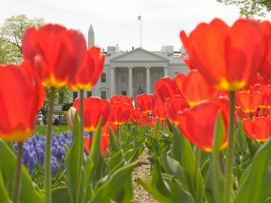 AP APTOPIX White House Tulips