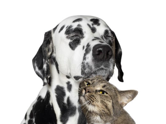 close friendship between a cat and a dog