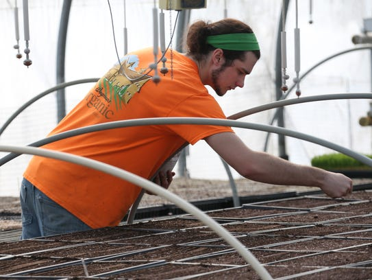 Matt Chartrand sows micro greens at Wegmans organic
