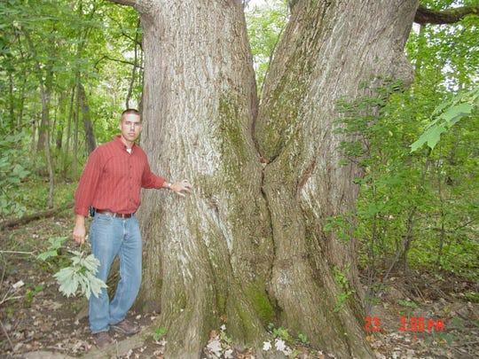 cnt fallen tree-2