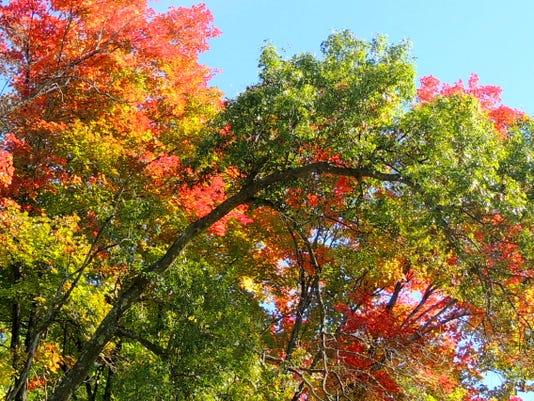 APC 100614 Yard MD BLOG-Fall color pt 5 2.JPG