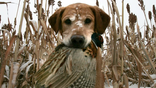 Bruce Deadman of Virchow Krause & Company out of Appleton, pheasant hunted with his dog Jeeves at Hunter's Park on Tuesday Dec. 11, 2007.