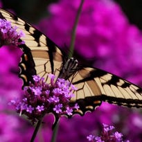 Pollinator gardens help maintain and restore populations of bees, birds and butterflies.