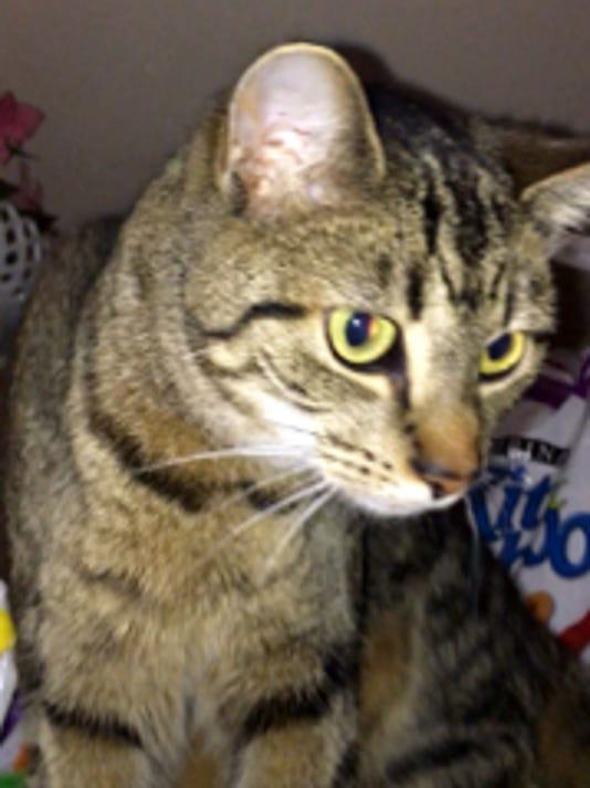 02 LAN Cat shot
