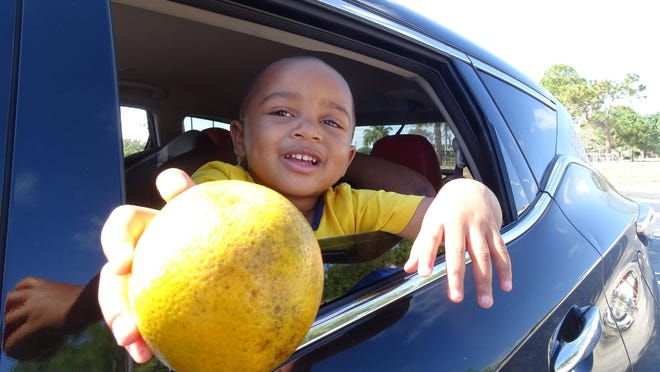 Destin, 3, joins his family as they pick up produce Thursday at the Ezell Hester Community Center in Boynton Beach.