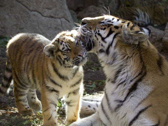 The Denver Zoo offers free days to make visiting easier for Colorado families.