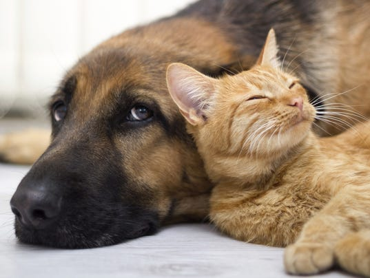 ELM Pets file image