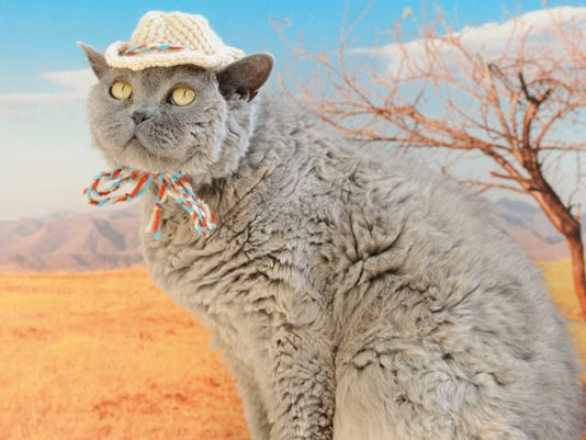 Crafts-Cats in Hats_Atzl-1.jpg