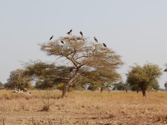 Sudan_jump.JPG
