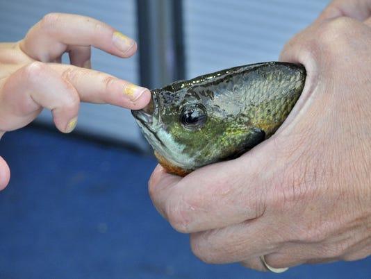 stc 0714 fishing.jpg