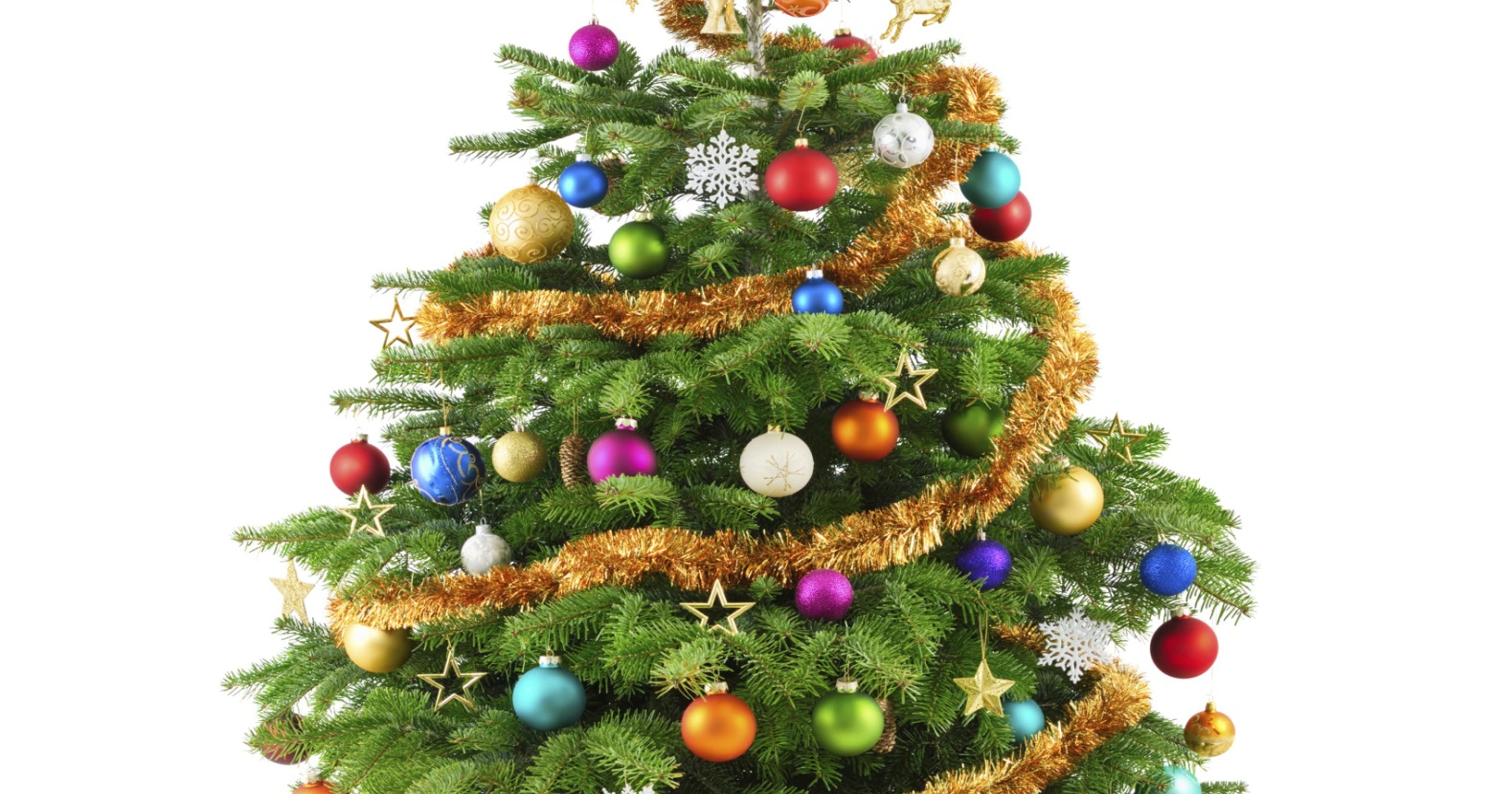 Get a real Christmas tree in or near Cheatham County