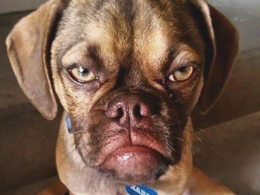 earl grumpy puppy
