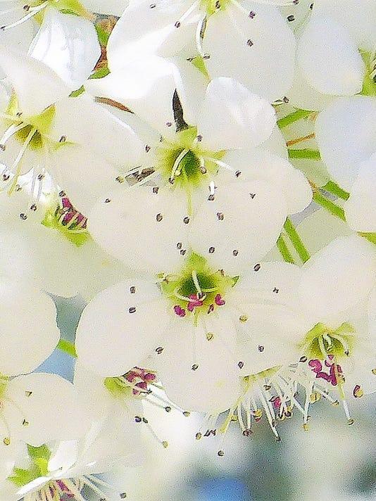blossom-close-up
