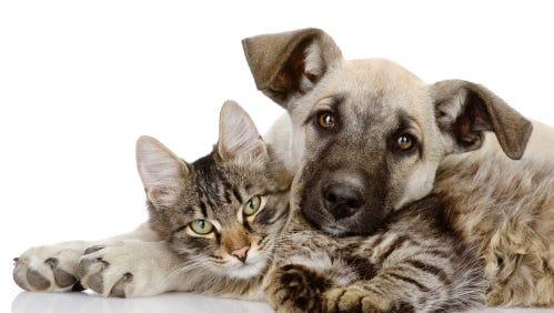 dog and cat lie together