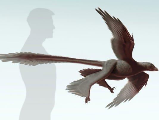 Changyuraptor_S. Abramowicz