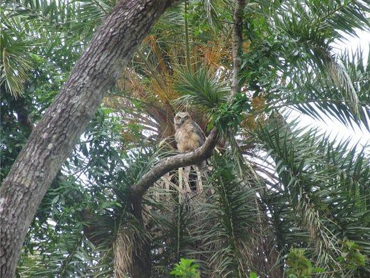 owl11x14.jpg