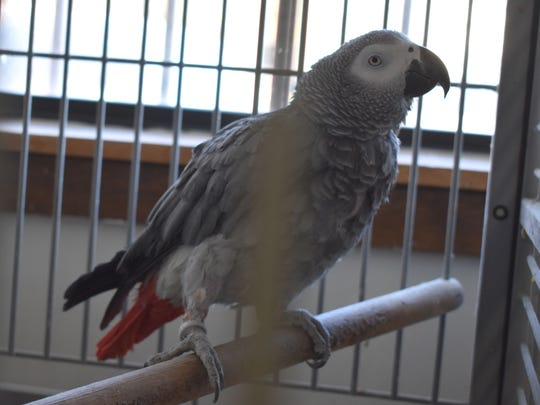 Scooter, a bird that was donated to the Alameda Park