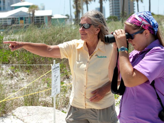 Bonnie Samuelsen, left, and Julie Schultz, right, with the Panhandle Shorebird Program check in a group of nesting shorebirds near the Land Shark bar and grill adjacent to the Margaritaville Beach Hotel.