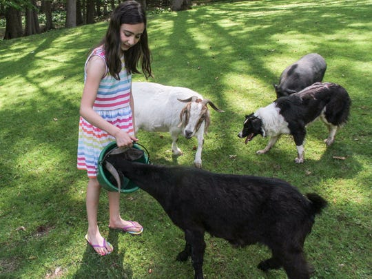 Gianna Licitra, daughter of the new chief law enforcement officer for the Monmouth County Society for the Prevention of Cruelty to Animals, helps take care of the animals at the Marlboro family's farm.