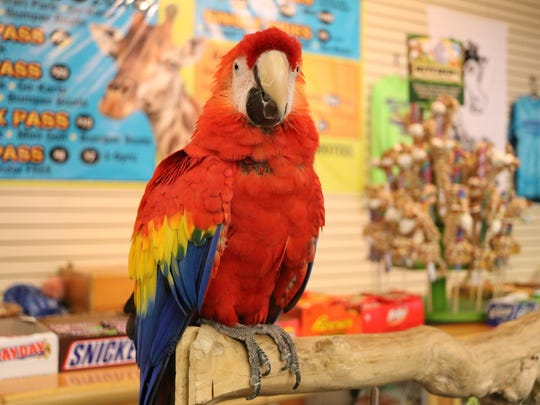 Felix the parrot greets visitors to the Watering Hole at the Monsoon Lagoon.