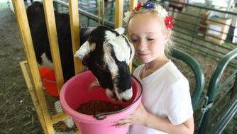 Feeding a goat is part of the day at the 4H Fair.  Here, Sammy Oblen, 7, of Budd Lake cares for a goat.