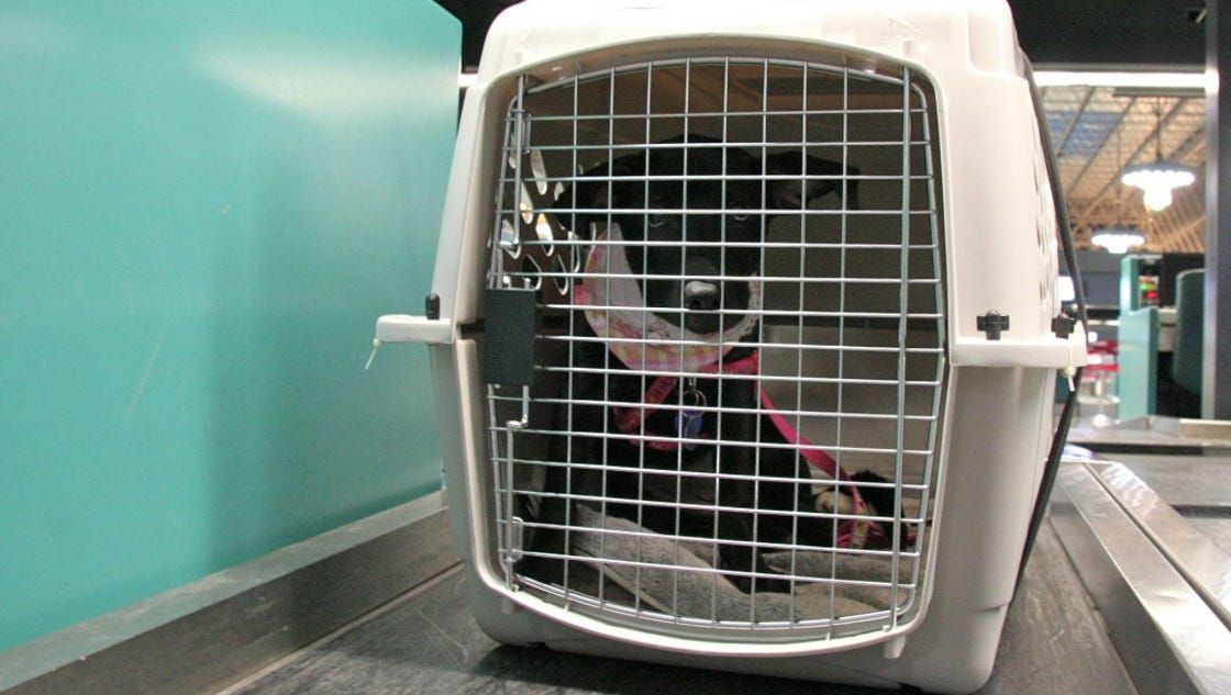 Delta will no longer allow pets as checked baggage for Can service dogs fly in cabin