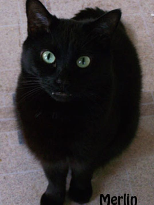blackcat-merlin