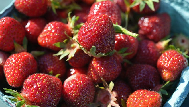The strawberries are ripe for picking at the Mason Farms fields in Girard Township, shown here on Tuesday. Pick-your-own fields at other farms in North East Township and Waterford Township should open soon.