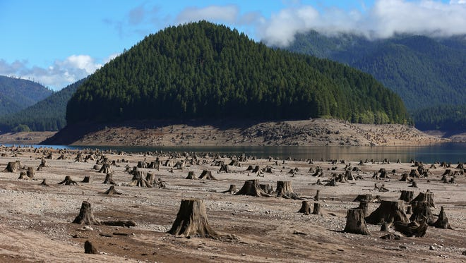 Old tree stumps are left exposed due to drought at Detroit Lake, Friday, September 18, 2015, in Detroit, Ore.