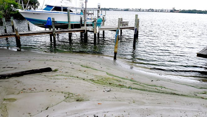 Layers of algae are seen in the sand on the northwest corner of the Palm City Bridge as green tinted waves of the receding tide from the South Fork of the St. Lucie River continue to splash the shore on Friday, June 8, 2018, in Palm City.