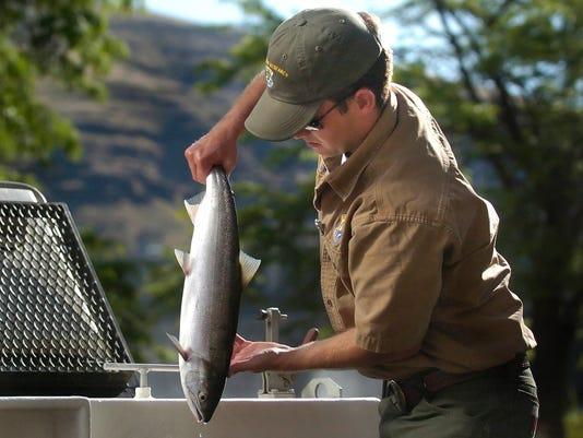 Sockeye Salmon-Recovery
