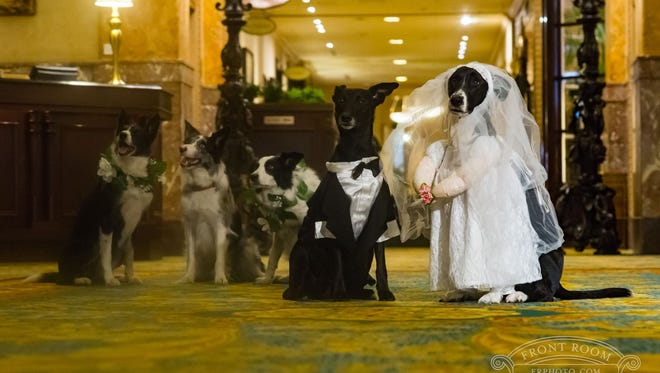A wedding party assembles at the Pfister Hotel. The hotel offers a dog wedding party as part of its special Valentine's Day packages.