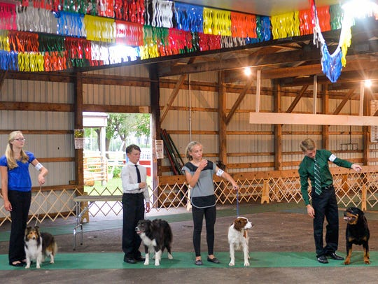 Competitors line up with their dogs Saturday, July