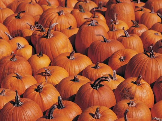 Thousands of pumpkins will be hp for grabs at the fall festival at Martin's Greenhouse.