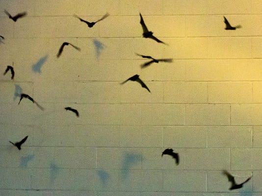 060917 - Bats 2